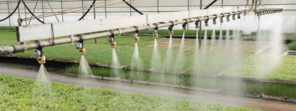 acqua nei vivai e coltivazioni in serra