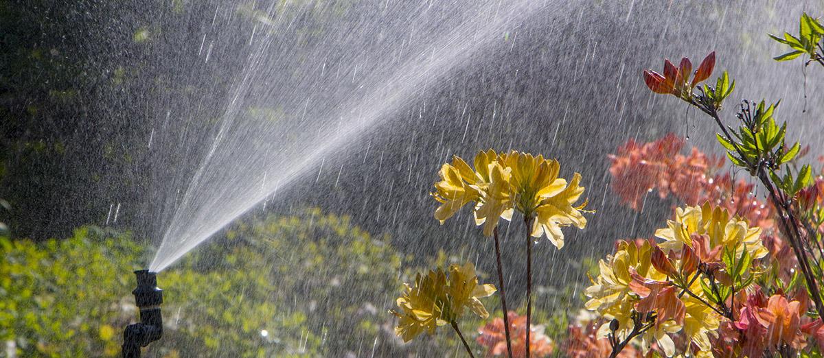 Acqua per irrigazione nella Floricoltura